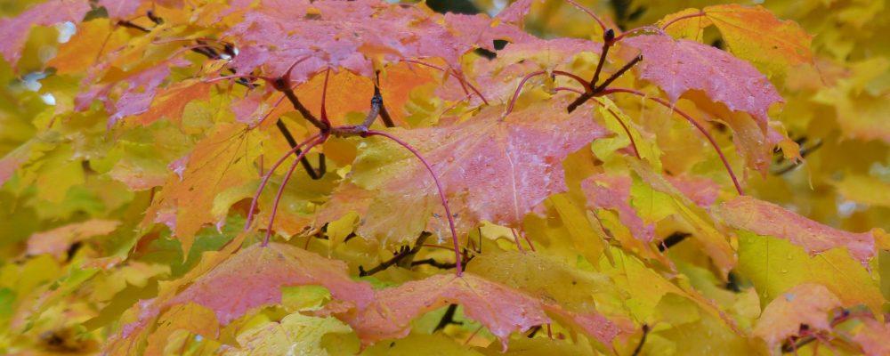cropped-2013-10-09-13-47-30.jpg