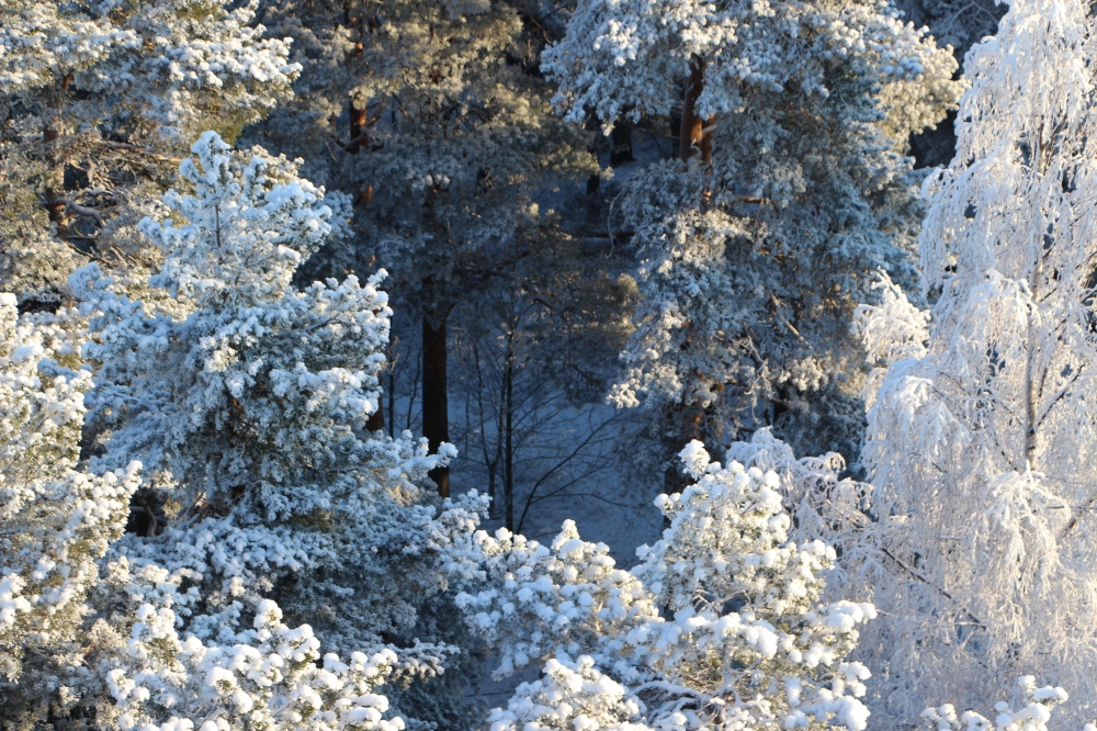 Lumipuut.JPG